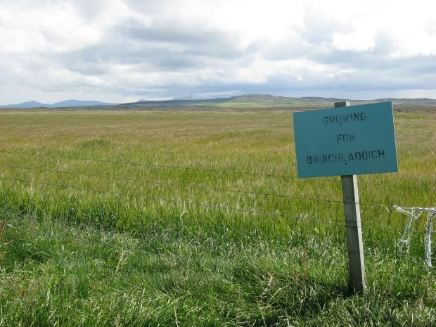 islay-barley-bruichladdich